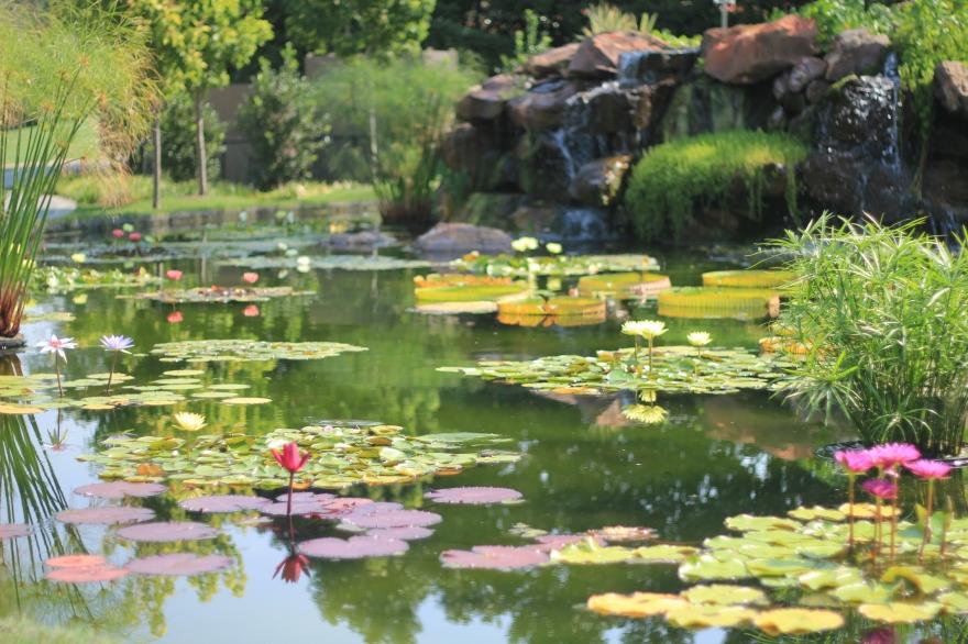 Arboretum pond