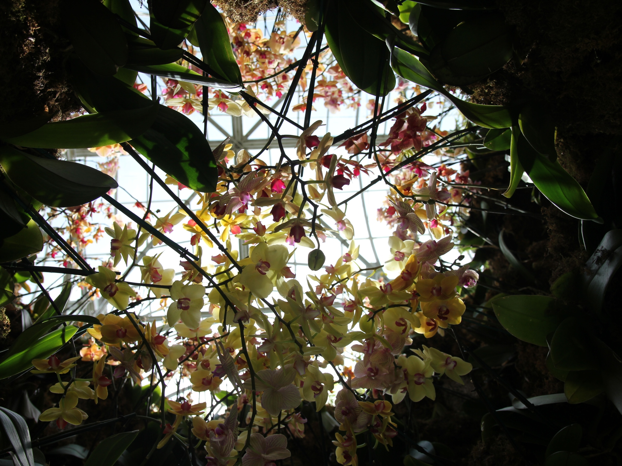 The orchid show chandeliers at the new york botanical garden enjoy the moment mozeypictures Gallery